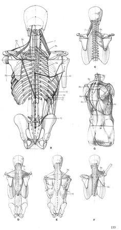 Anatomía digital.                                                                                                                                                                                 Más