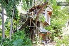Treehouse at Lush Permaculture Farm | Airbnb Mobile