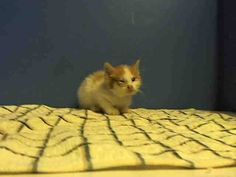 TO BE DESTROYED 9/27/13 Brooklyn Center  My name is TERRY. My Animal ID # is A0979890. I am a male white and orange domestic sh mix. The shelter thinks I am about 4 WEEKS old.  I came in the shelter as a STRAY on 09/23/2013 from NY 11368, owner surrender reason stated was STRAY. I came in with Group/Litter #K13-154312. https://www.facebook.com/photo.php?fbid=670414662970369&set=a.576546742357162.1073741827.155925874419253&type=3&theater