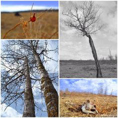 Elk Island | Tree Buffalo Death | Alberta | Canada by ZenLandia on Etsy
