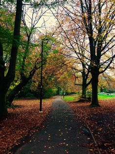 Refreshing early morning walks through the Common; never fails to clear your head - At Southampton Common in Southampton, Hampshire. #LoveSouthampton