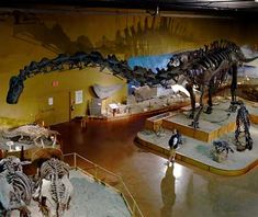 """Wyoming Dinosaur Center, Thermopolis, WY (Road: I-25)  The thrill of discovery keeps travelers on their knees, scraping for bones in the dust of the Rockies. This dinosaur graveyard is home to one of the richest collections of fossilized remains in the world. Its popular """"Dig for a Day"""" program enables travelers to become amateur paleontologists and look for 150 million-year-old fossils. After a day rescuing Jurassic remains from the detritus of time, explore the 12,000-square-foot…"""