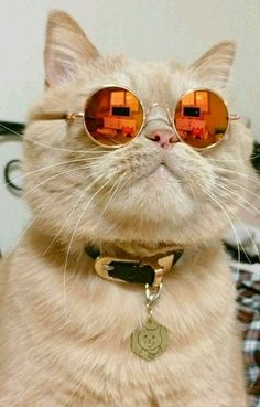 Cats - When your cat has more style then you! - by gold_h https://twitter.com/ggogmsegonm/status/903786973487357952
