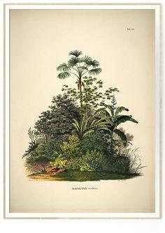 MAURITIA aculeata. Botanical Palm Print #3504 available at MoseyHome