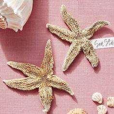 Sea Stars - America's Most Popular Seashells - Coastal Living