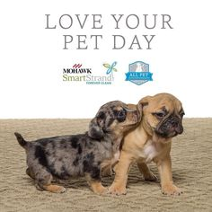 To celebrate National #LoveYourPetDay we are launching our all new All Pet Protection and Warranty for SmartStrand Forever Clean carpets. We cover all #pets all accidents all the time! Click the link in the profile to learn more! #allpetcarpet