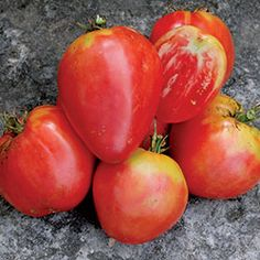 Hungarian Heart Tomato - Seed Savers Exchange