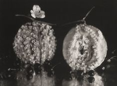 A Still Life Collection: Michiko Kon (bn 1955)