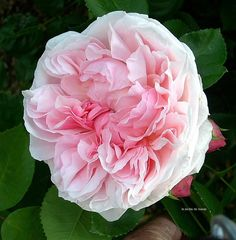 english gardens - Bing Images