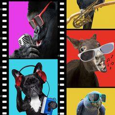 Animals On Film Wallpaper | Departments | DIY at B&Q