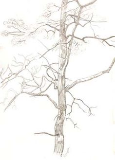 how to draw trees tutorial excellent! - the PDF is fantastic http://www.lessonsforhope.org/pdf/Guide_To_Tree_Sketching_PDF.pdf