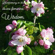 Apple Blossom Goddess essence, for divine feminine wisdom and to blossom your divine self.