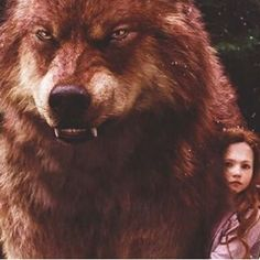 Discovered by V̲̅. Find images and videos about love, cute and Hot on We Heart It - the app to get lost in what you love. Twilight Jacob And Renesmee, Jacob Black Twilight, Twilight Saga Series, Twilight Edward, Twilight Cast, Twilight Series, Twilight Movie, Jacob Lobo, Jacob And Bella