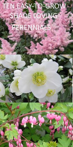 Shade plants can thrive without full sun and under trees. Perennial shade plants can be grown in pots as well as in the border. (scheduled via http://www.tailwindapp.com?utm_source=pinterest&utm_medium=twpin)