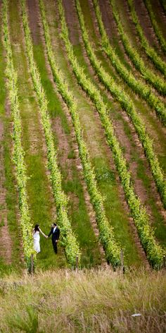 Wedding stroll in the vineyard at Youngberg Hill- McMinnville OR