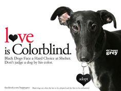 www.facebook.com/happygrey #adopt