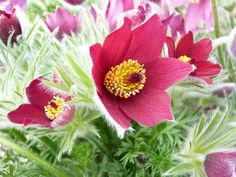 Herbaceous Perennials are invaluable for adding colour, form and texture, as well as attracting bees, butterflies and other pollinating insects. Types Of Flowers, Red Flowers, Colorful Flowers, Rose Garden Design, Gravel Garden, Bee Friendly, Herbaceous Perennials, Private Garden, Types Of Soil