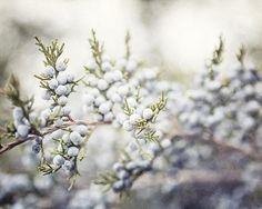 March | Pastel Juniper Berries