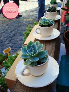 Love these cups of suculents. Cute way to add a tiny bit of green to any space Succulent Gardening, Succulent Care, Succulent Terrarium, Cacti And Succulents, Planting Succulents, Container Gardening, Gardening Tips, Planting Flowers, Succulent Bowls