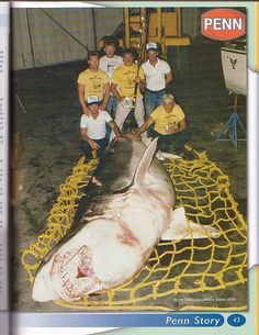 Page 4 of 4 - Was this the largest Great White ever caught? - posted in Main Forum: ^ that looks alot bigger than 25 ... WOW that fish could swallow u whole without hesitation