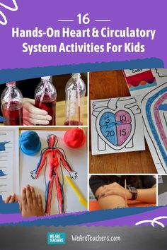 """Make a working heart pump, fill a bottle with model blood, hold a stuffed animal """"blood drive,"""" and more fun circulatory system activities! Teaching Kids, Kids Learning, Circulatory System For Kids, Games For Kids, Activities For Kids, System Model, Math Practices, Body Systems, Heart For Kids"""