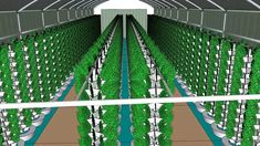 Vortex Aquaponics - Urban Farms - 70 ft Aquaponics Hoop House