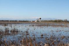 Els aiguamolls amb l'observatori de Senillosa i el Cadí al fons