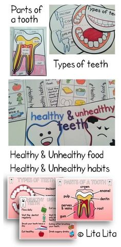 Teeth foldables for K-2 students.Parts of a tooth, dental health habits and types of teeth.