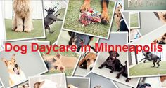 Is it Necessary to Leave Your Furry Child at a Dog Daycare? Your Best Friend, Best Friends, Dog Daycare, Dog Boarding, Dog Days, Pets, Children, Places, Free