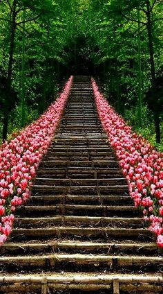 Tulip Stairs, Kyoto, Japan (by afstracuzzi on Flickr)