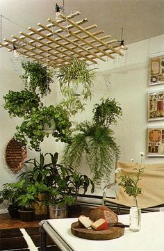 32 the great inspiration of indoor hanging flowers and plants 4 Room With Plants, House Plants Decor, Hang Plants From Ceiling, Indoor Garden, Indoor Plants, Hanging Flowers, Balcony Hanging Plants, Interior Plants, Interior Garden