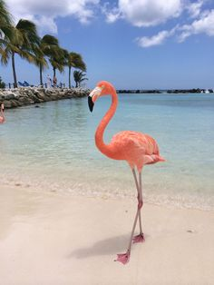 Someday i want to be on a beach with the flamingos. Flamingo Painting, Flamingo Art, Pink Flamingos, Flamingo Beach, Animals And Pets, Baby Animals, Funny Animals, Beautiful Birds, Animals Beautiful
