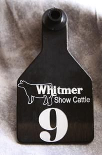 Cook Show Cattle Custom Tags by Design Calf Cutout by Mittag Design Show Cows, Show Horses, Showing Livestock, Showing Cattle, Show Cattle Barn, Cattle Tags, Show Steers, Cow Ears, Ear Tag