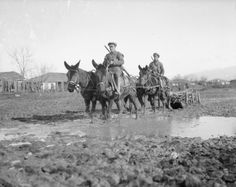 Mule drawn sleigh carrying supplies over a muddy area. Balkan Front, January, 1917.