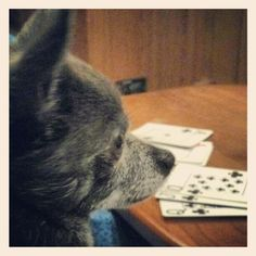 Roxy playing cards