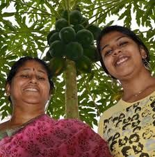 Image result for potato market rate in mettupalayam