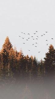 اجمل خلفيات ايفون 8 الاصلية Wallpaper Iphone Original Background Hd Wallpaper Watercolor Landscape Landscape Paintings