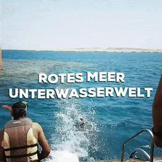 Unterwasserwelt - Rotes Meer - Ägypten  Einfach Tauchen lernen in 4 Schritten!   Tauchen lernen in Ägypten. Taucherlebnis in Sharm El Sheikh!    #egypt #sharm #diving #urlaub #tauchen #snorkling #redsea #underwater #see #boat #travel Sharm El Sheikh, Travel Videos, Am Meer, Red Sea, Movie Posters, Movies, Learn To Scuba Dive, Diving School, Adventure