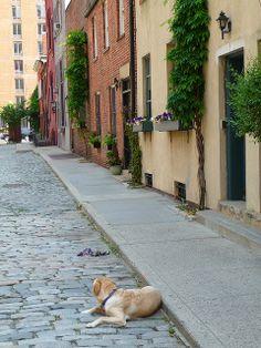 Dog on Washington Mews, Greenwich Village by Dave Aragona, via Flickr