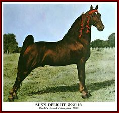 1963 World Grand Champion Tennessee Walking horse, Sun's Delight D. home page