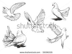Hand drawn vector sketches of beautiful White doves in different positions. All doves are in separate layers. Two doves are more detailed. by Elena Maximova, via ShutterStock