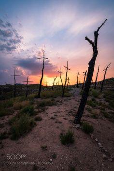 El Bosc de les Creus (Maurizio Frigerio / Vic / Spain) #NIKON D750 #landscape #photo #nature