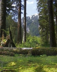 Hoh Rain Forest.... One day i will go...one day...i will stand there in this very spot....