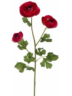 Ranunculus Spray in Beauty Red   Afloral.com - Same Day Shipping