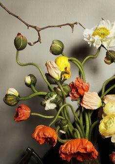 Poppies.  Via Emily Thompson Flowers.