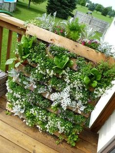 Awesome Summer Gardening DIY – Make a Garden Planter from a Pallet garden projects Awesome Summer Gardening DIY – Make a Garden Planter from a Pallet Jardim Vertical Diy, Vertical Garden Diy, Vertical Gardens, Vertical Planter, Diy Herb Garden, Garden Planters, Pallet Planters, Balcony Gardening, Pallet Patio