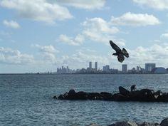 Brasil - Pernambuco - Recife from Olinda. Photo by Sérgio Dourado.