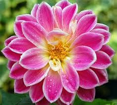 The image is radial balance as the flower is in the middle taken full view