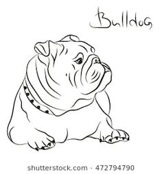 The major breeds of bulldogs are English bulldog, American bulldog, and French bulldog. The bulldog has a broad shoulder which matches with the head. Mini English Bulldogs, English Bulldog Art, Bulldog Mascot, Bulldog Puppies, Bulldog Cartoon, Bulldogge Tattoo, Vector Dog, Bulldog Drawing, Bulldog Images