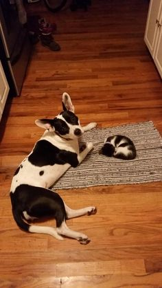 dog watches over kitten while she sleeps